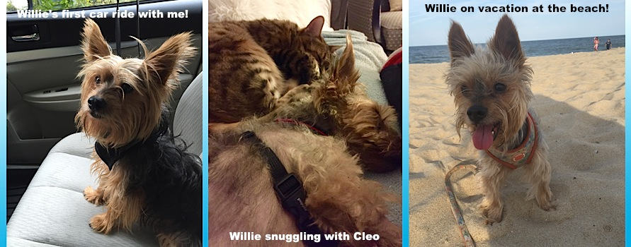 Willie Success Story Collage