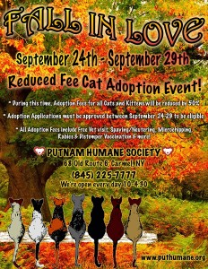 Fall in Love Cat Adoption Event