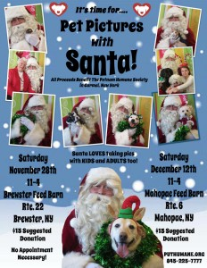 Pet pictures with Santa 2015 dog