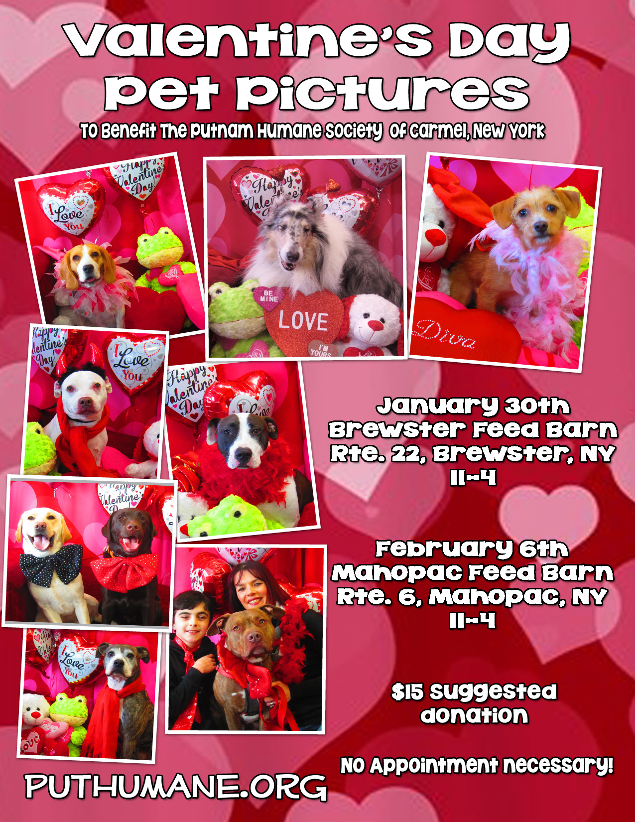 Upcoming Events Valentine S Day Pet Pictures At The