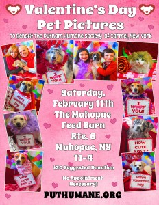 2017 Valentine's Day Pet Pictures