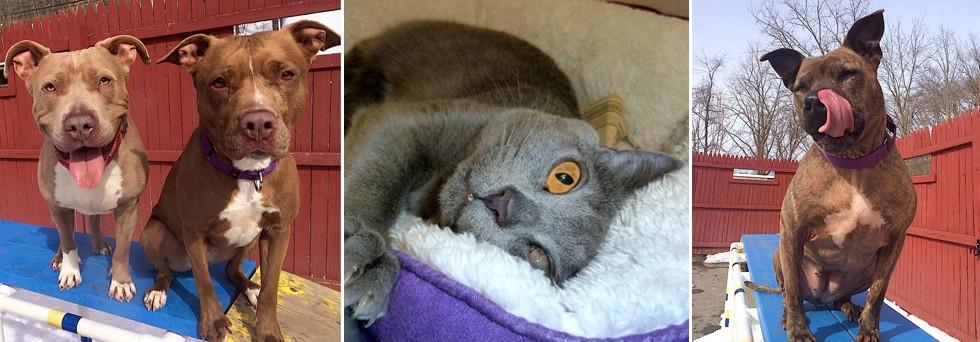 Ny Humane Society That Have Barn Programs For Cats